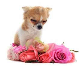Pet Funeral Service